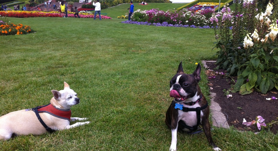 Dogs love the Hall of Flowers, too!
